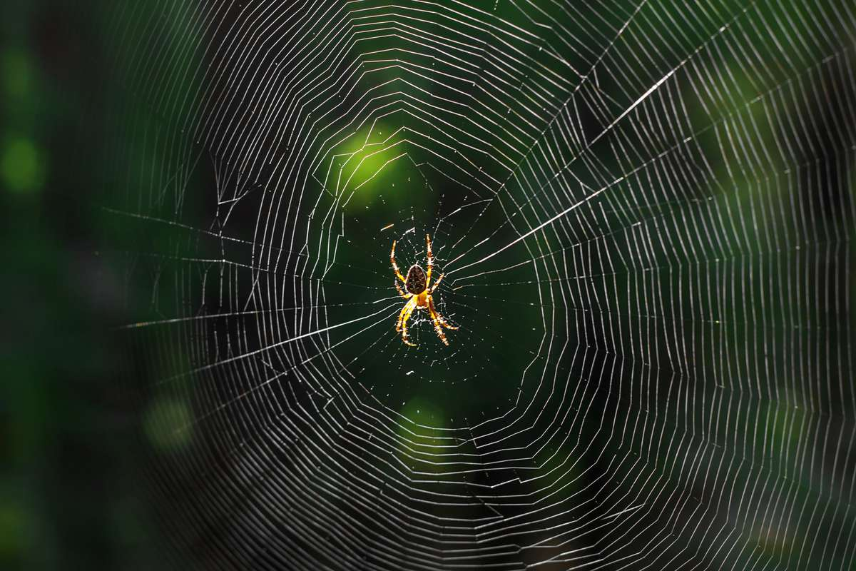 """MIT wants to """"communicate"""" with spiders using their web music"""